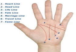 What The Lines On Your Palm Mean
